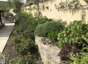 Beautiful plants and wall in country garden in Dorset
