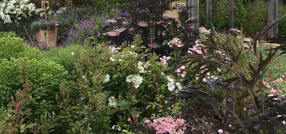 Beautiful traditional garden in Gloucestershire with pink flowers in the foreground