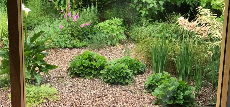Beautiful plants in Urban Wildlife Garden Bristol
